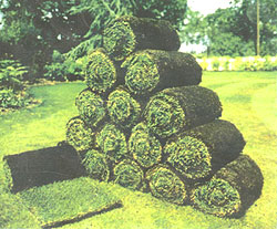 Photograph of rolls of turf